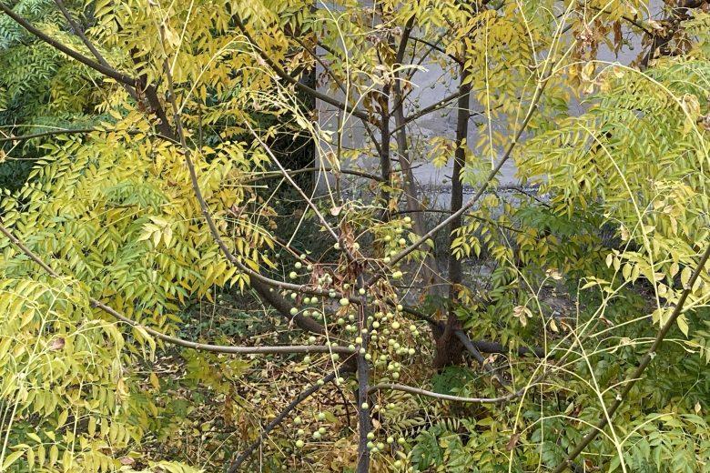 21 novembre, festa degli alberi